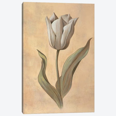 Tulip 3-Piece Canvas #VHU14} by Virginia Huntington Canvas Print