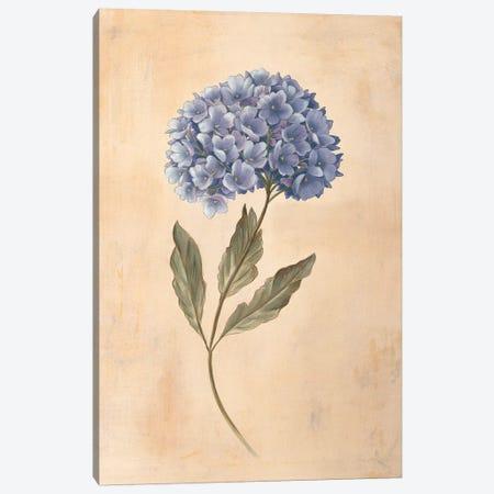 Hydrangea Canvas Print #VHU15} by Virginia Huntington Art Print