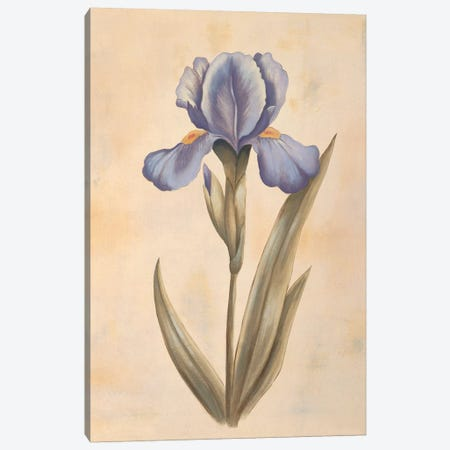 Iris Canvas Print #VHU16} by Virginia Huntington Canvas Art Print