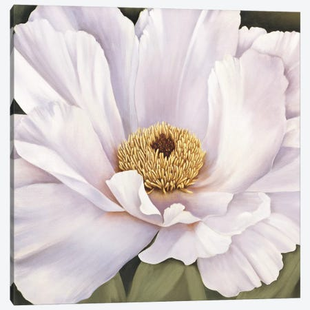 Peony Canvas Print #VHU3} by Virginia Huntington Canvas Artwork