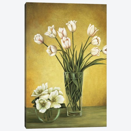Tulipes blanches Canvas Print #VHU6} by Virginia Huntington Canvas Print