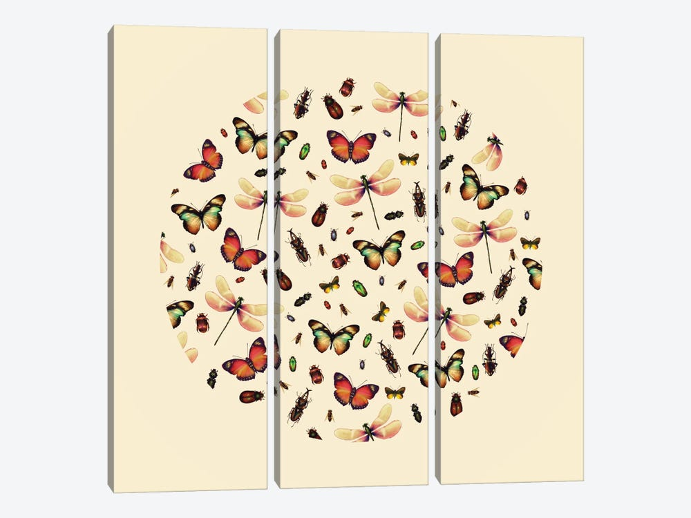 Insecta by Victor Vercesi 3-piece Canvas Wall Art