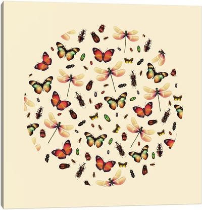 Insecta Canvas Art Print