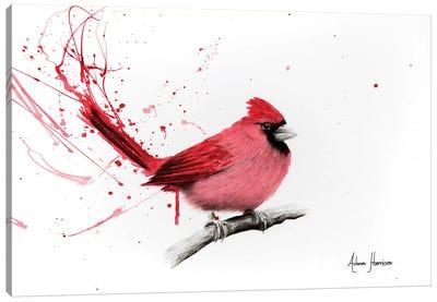 Curious Cardinal Canvas Art Print