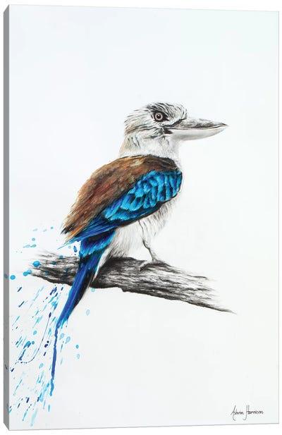 Blue Kookaburra Canvas Art Print