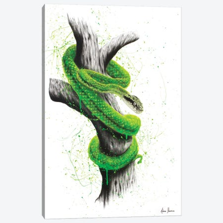 Daintree Escape Canvas Print #VIN168} by Ashvin Harrison Canvas Artwork
