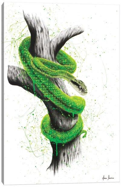 Daintree Escape Canvas Art Print
