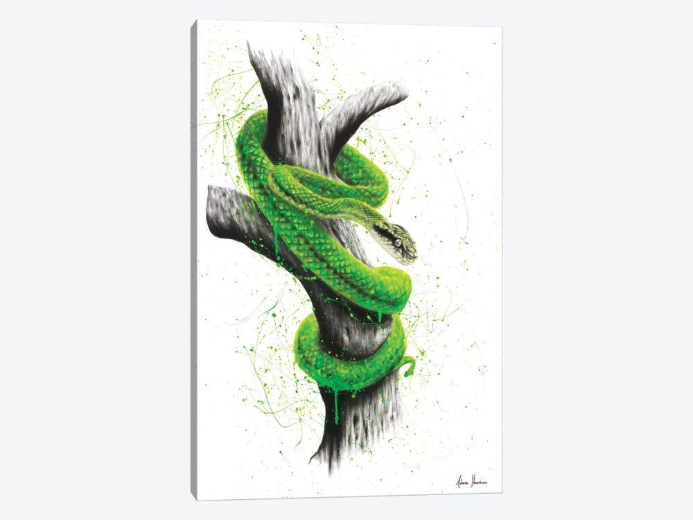 Daintree Escape by Ashvin Harrison 1-piece Canvas Print