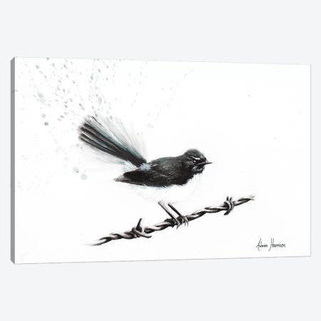 Coleraine Willy Wagtail Canvas Print #VIN227} by Ashvin Harrison Canvas Art