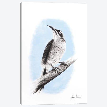 Riflebird Canvas Print #VIN249} by Ashvin Harrison Canvas Print