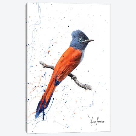 Bird of Sunsets Canvas Print #VIN268} by Ashvin Harrison Canvas Print