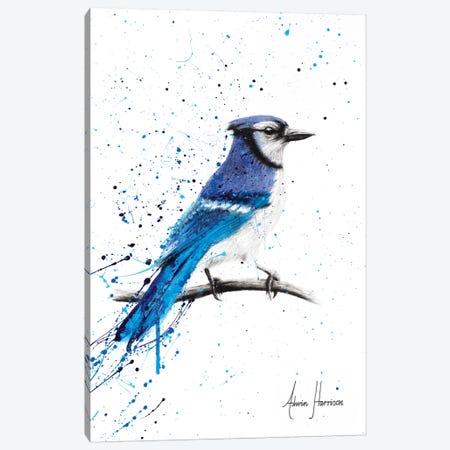 Blue Jay Sunday Canvas Print #VIN269} by Ashvin Harrison Art Print