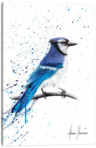 Blue Jay Sunday Canvas Art Print