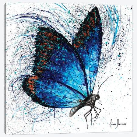Lone Shy Butterfly Canvas Print #VIN405} by Ashvin Harrison Canvas Art
