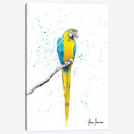 Mischievous Macaw Canvas Print #VIN419} by Ashvin Harrison Canvas Artwork