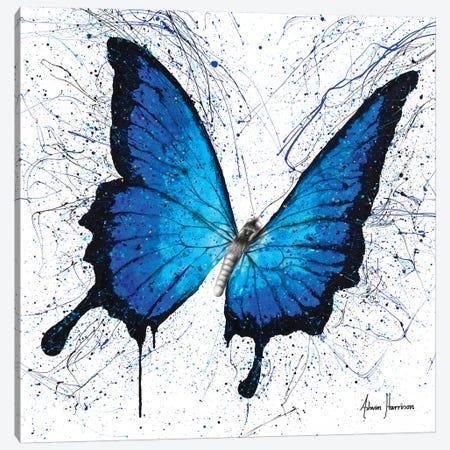 Tropics of Blue Butterfly Canvas Print #VIN429} by Ashvin Harrison Canvas Print