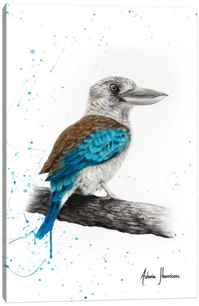 One Clever Kookaburra Canvas Art Print