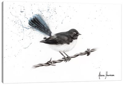 Centenary Willy Wagtail Canvas Art Print