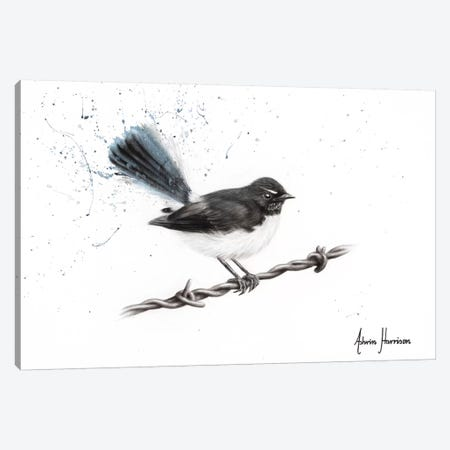 Centenary Willy Wagtail Canvas Print #VIN487} by Ashvin Harrison Canvas Art
