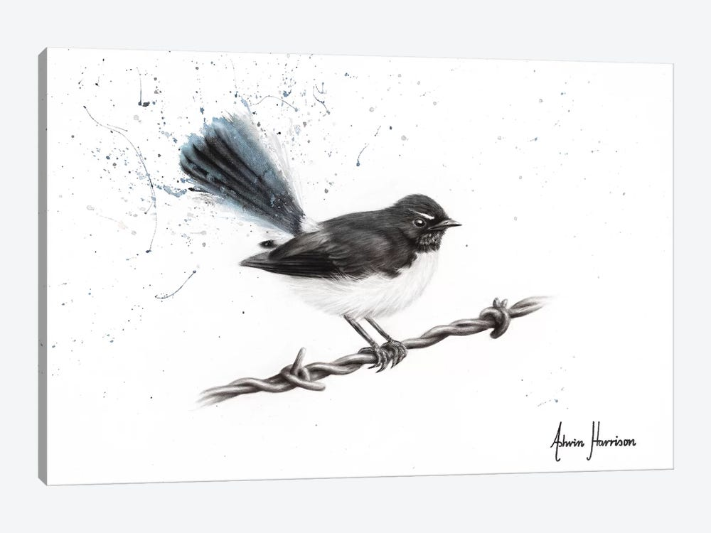 Centenary Willy Wagtail by Ashvin Harrison 1-piece Canvas Art
