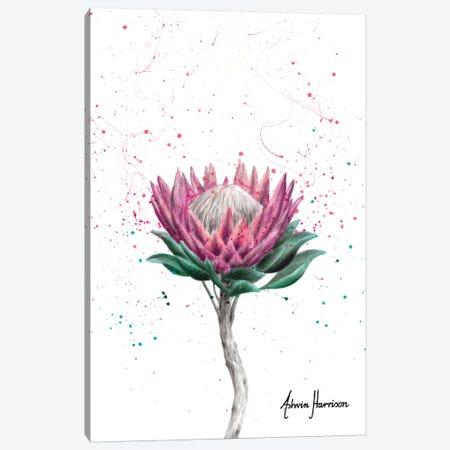 Sugarbush Flower Canvas Print #VIN508} by Ashvin Harrison Canvas Artwork