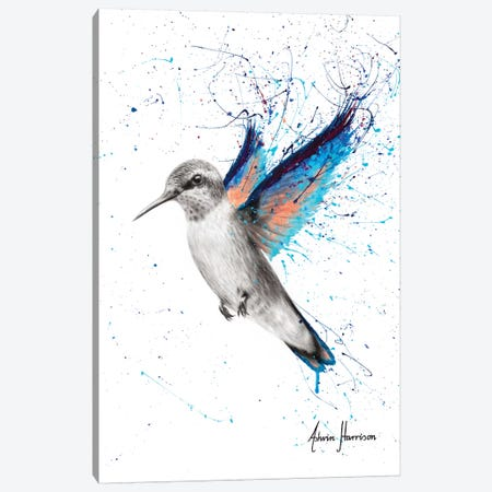 Azul Hummingbird Canvas Print #VIN530} by Ashvin Harrison Canvas Art Print