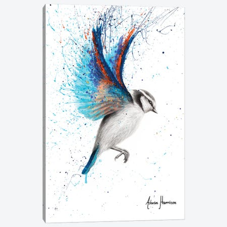 Sunset Feather Finch Canvas Print #VIN531} by Ashvin Harrison Art Print
