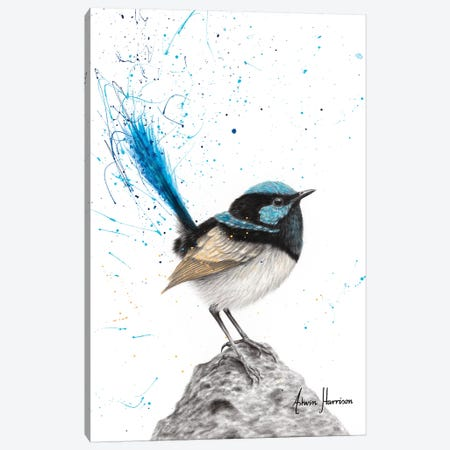 Mountain Blue Wren Canvas Print #VIN534} by Ashvin Harrison Canvas Wall Art