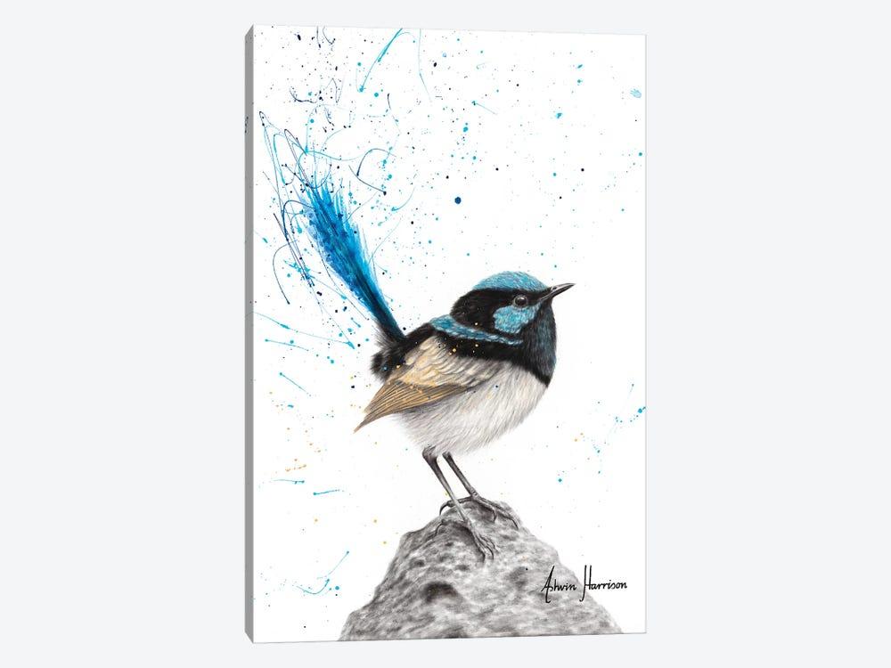 Mountain Blue Wren by Ashvin Harrison 1-piece Art Print