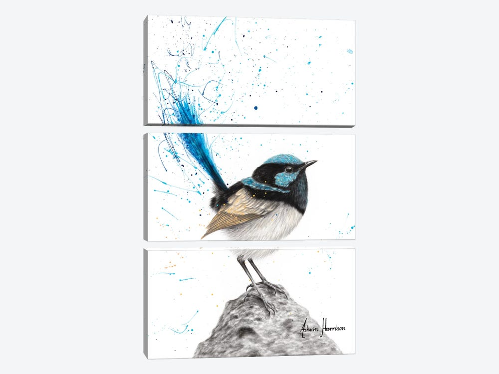 Mountain Blue Wren by Ashvin Harrison 3-piece Art Print