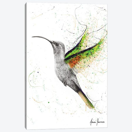 Hero Hummingbird Canvas Print #VIN588} by Ashvin Harrison Canvas Wall Art