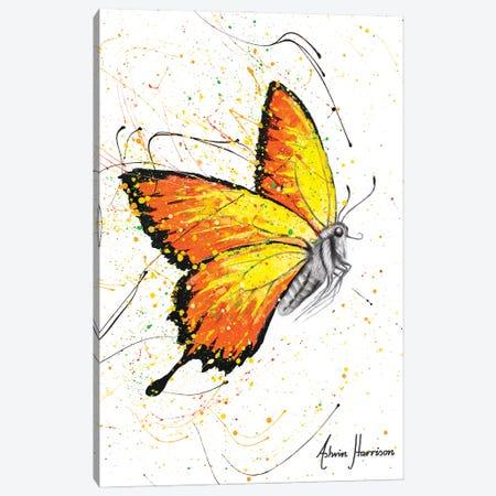 Warm Summer Butterfly Canvas Print #VIN649} by Ashvin Harrison Art Print