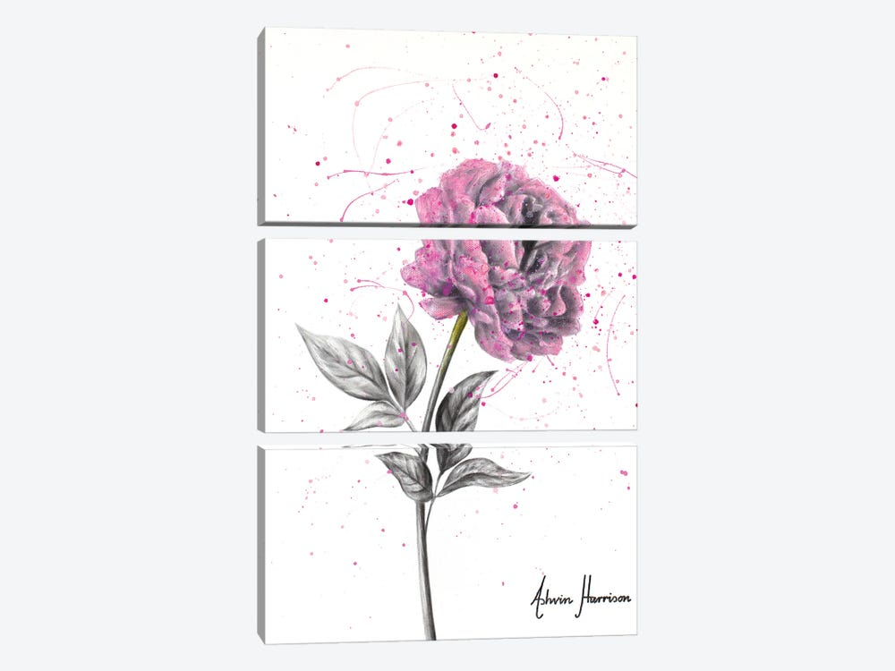 Soft Bloom by Ashvin Harrison 3-piece Canvas Artwork