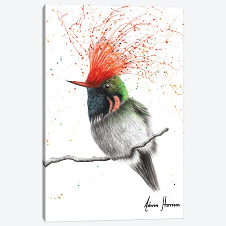 Rufous Crested Coquette Canvas Print #VIN720} by Ashvin Harrison Canvas Art