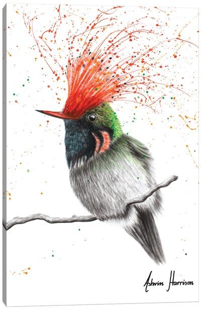 Rufous Crested Coquette Canvas Art Print
