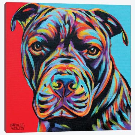 Canine Buddy III Canvas Print #VIT101} by Carolee Vitaletti Canvas Art Print