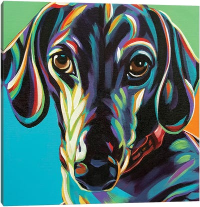 Painted Dachshund I by Carolee Vitaletti Canvas Art Print