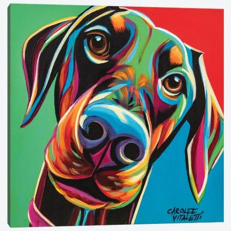 Chroma Dogs I Canvas Print #VIT132} by Carolee Vitaletti Canvas Artwork
