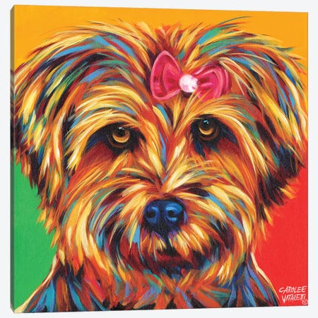 Sweet Yorkie I Canvas Print #VIT14} by Carolee Vitaletti Art Print