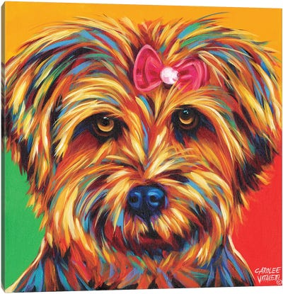 Sweet Yorkie I Canvas Print #VIT14