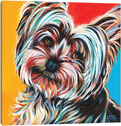 Sweet Yorkie II by Carolee Vitaletti Canvas Art Print