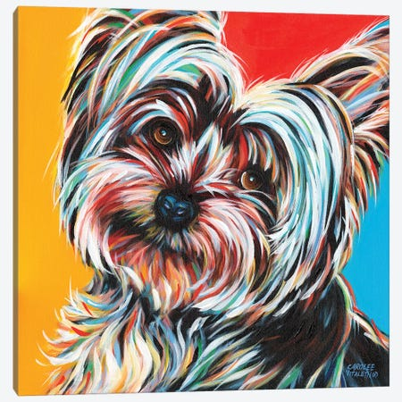 Sweet Yorkie II Canvas Print #VIT15} by Carolee Vitaletti Canvas Print