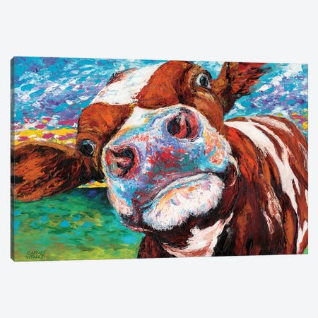 Curious Cow I Canvas Print #VIT1} by Carolee Vitaletti Canvas Artwork