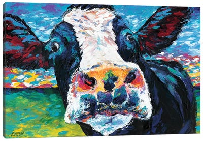 Curious Cow II by Carolee Vitaletti Canvas Art Print