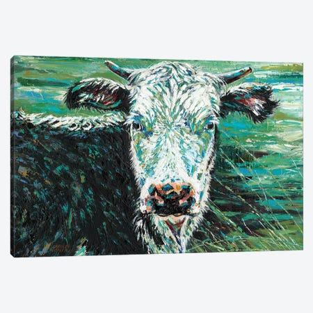 Marshland Cow I Canvas Print #VIT64} by Carolee Vitaletti Canvas Art