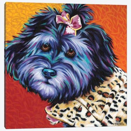 Cute Pups III Canvas Print #VIT77} by Carolee Vitaletti Canvas Print