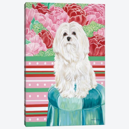 Della Rose Maltese Canvas Print #VIT78} by Carolee Vitaletti Canvas Artwork