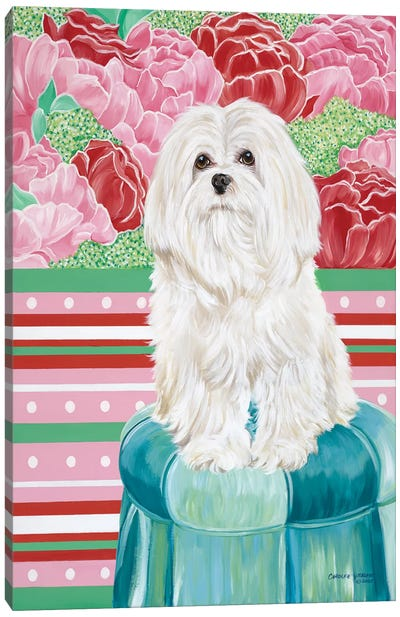 Della Rose Maltese Canvas Art Print