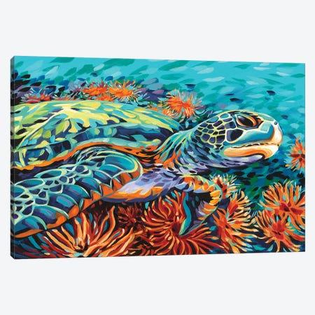 Sea Sweetheart I Canvas Print #VIT87} by Carolee Vitaletti Canvas Art