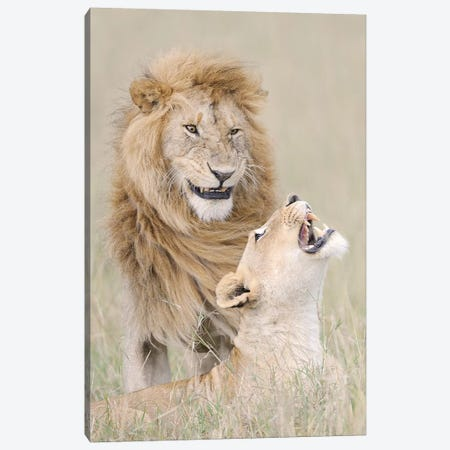 Lion Lover Canvas Print #VKM3} by Muriel Vekemans Canvas Wall Art